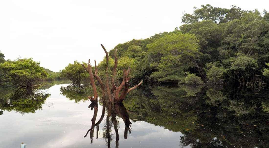 Amazonas im Rollstuhl