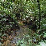 Eco-Lodge Itororó