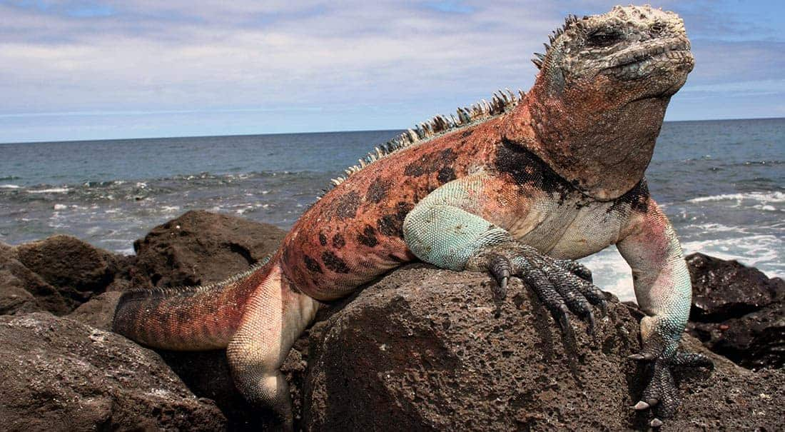 Inselhüpfen Galápagos