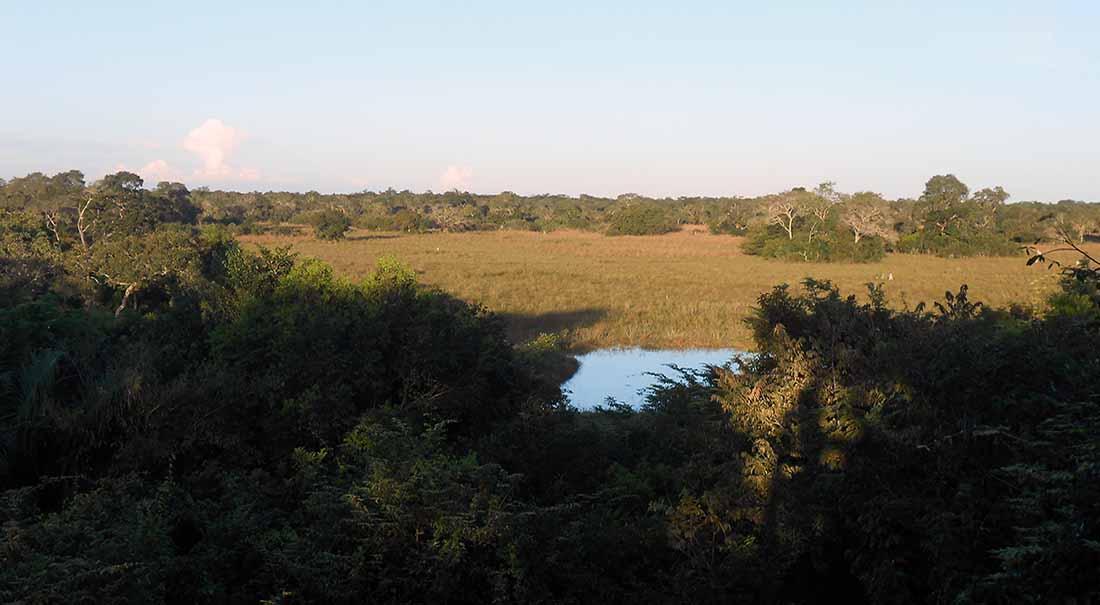 Pantanal einst und heute