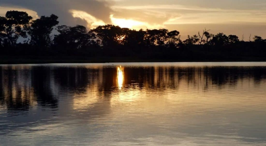Info Pantanal